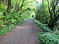 Woodland path within the nature reserve - Slapton - May 2015 - panoramio.jpg