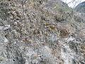 Xichu, Guanajuato (5754059476).jpg