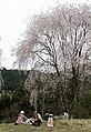 Yoshinoyama (7134445147).jpg