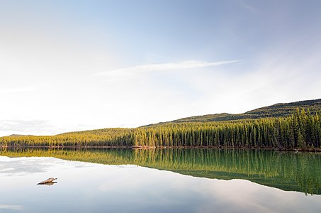 Nameless lake in the woods of Yukon.