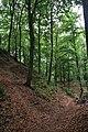 Zeisigwald Steinbruch Waldwege LvT.JPG