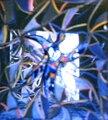 Zerkalnij kvadrat Konstantin Kedrov 1986.tif