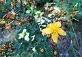 Zielone Nature Reserve (9).jpg