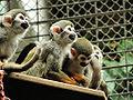 Zoo019.jpg