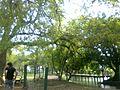 Zoo Municipal de Mercedes - panoramio (13).jpg