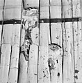 Zwam op houtconstructie - Delft - 20049217 - RCE.jpg