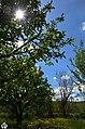 (((باغات اطراف مراغه ))) - panoramio (2).jpg