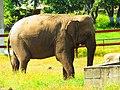 (فيل (جيجل.jpg