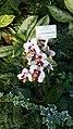 БотаническийСадCH26.jpg