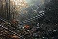 Букові ліси над водоспадом Шипіт.jpg