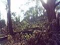 Бурелом, Високий замок, серпень 2009.jpg