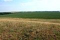 Вид с горы Шагиртау на поле - panoramio.jpg