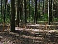 В лесу - panoramio (34).jpg