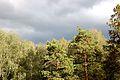 Грянет буря... - panoramio.jpg