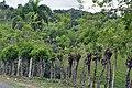 Доминиканская Республика - panoramio (45).jpg