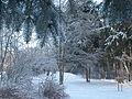 Зима в парку.JPG