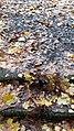 Каменная лестница.Вики-встреча 24.10.2020 03.jpg