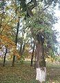 Капустняни Парк Ясень.jpg