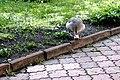 Київський зоопарк Гуска атакує 03.JPG