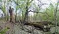 Ландшатний заказник на лівому березі озера Конча (36).jpg