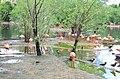 Московский зоопарк. Фото 7.jpg