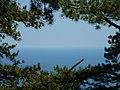 Пейзаж на подъеме от Ласточкиного гнезда, В ветвях.JPG