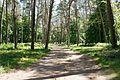 Сосновий парк Лохвиця 3.jpg