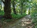 Столітні липи - panoramio.jpg