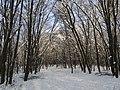 Украина, Киев - Голосеевский лес 171.jpg