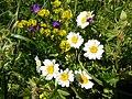 Цветы на склоне горы Шелудивой.jpg