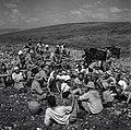 דליה (מזכרת אוכברג) - ילדי תל אביב עוזרים בסיקול האבנים-JNF013498.jpeg