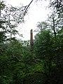 درخت سر شکسته در جنگل جاده 3هزار - panoramio.jpg