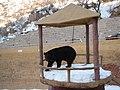 八达岭景区的熊乐园 - panoramio - 江上清风1961 (1).jpg