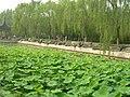 北宫森林公园 - panoramio.jpg