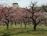 大阪城天守閣と梅林 Plum Grove and Osaka Castle
