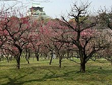 大阪城天守閣と梅林 Plum Grove and Osaka Castle.jpg
