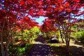 平岡樹芸センター (Hiraoka arboriculture center) - panoramio.jpg
