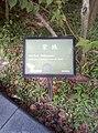 植物園中的植物及樹木花草(包括歷史遺跡)-30.jpg