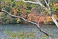 白樺と湖 - panoramio.jpg