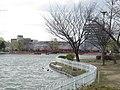 開成山公園 五十鈴湖 桜の季節.jpg
