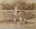 -Three Children and a Dog Playing in the Creek, July 4, 1883- MET DT8257.jpg