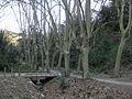 059 Torrent de la Budellera, vora el pantà de Vallvidrera.jpg