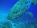 0707GBR 5 big lips M (3745361101).jpg