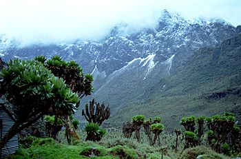 English: Ruwenzori mountains Autor:Nick06