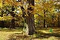 131103 Hokkaido University Botanical Gardens Sapporo Hokkaido Japan04s3.jpg