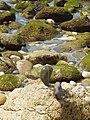 16-05-2017 Balancing Stones on Praia da Balbina (5).JPG