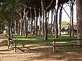 19-03-16 Rosignano Parco con pini vicino via della Stazione.jpg