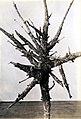 1937. Witches' broom caused by fir false mistletoe, Razoumofskya occidentalis abietina on lowland white fir at Sen. McNary's farm. Salem, Oregon. (35971114996).jpg