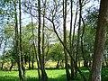 2007 - Abril- Ribadumia-Pontevedra-España.jpg