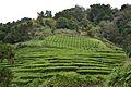 2012-10-15 17-28-35 Portugal Azores Porto Formoso.JPG